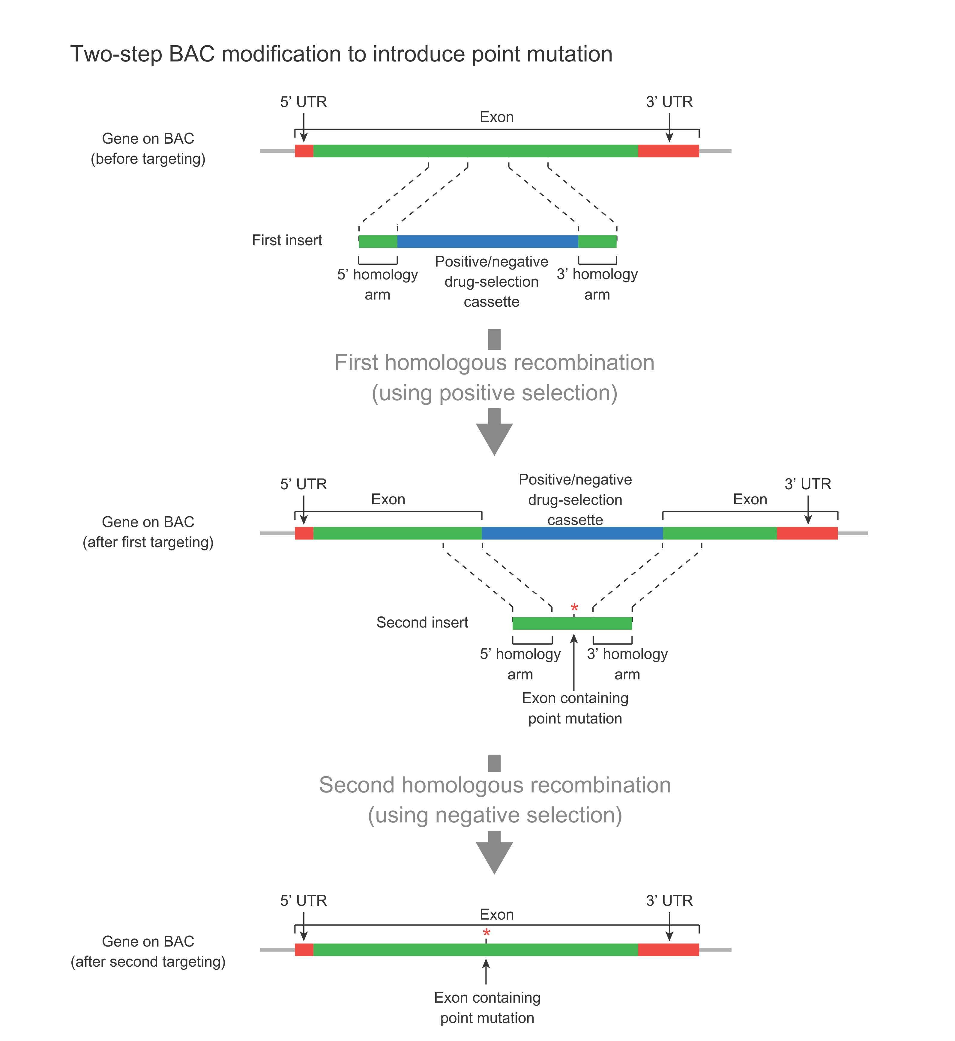 Bac Modification Recombineering Vectorbuilder